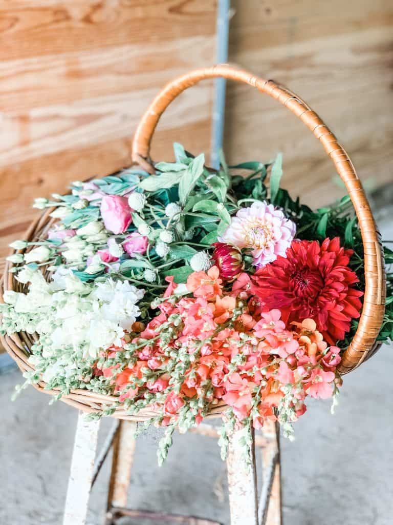Basket full of beautiful dahlias and snapdragon flowers in pink, coral, white and red hues.